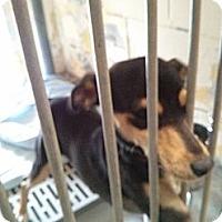 Adopt A Pet :: Millie - Wallaceburg, ON