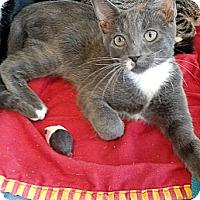 Adopt A Pet :: Jesse - Seminole, FL