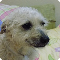 Adopt A Pet :: Lucas - Tumwater, WA