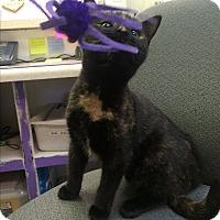 Adopt A Pet :: Adele - Richboro, PA