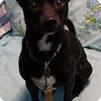 Adopt A Pet :: Tank - Oberlin, OH