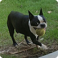 Adopt A Pet :: Gabbie - Byhalia, MS