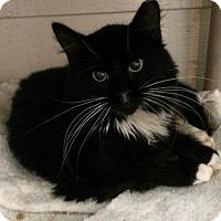 Adopt A Pet :: Miles - Horseshoe Bay, TX