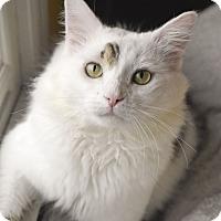 Adopt A Pet :: Ash - Huntsville, AL