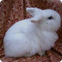 Adopt A Pet :: BLUE BELLE - Goleta, CA