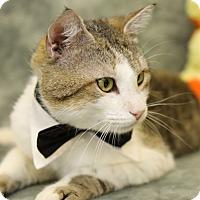 Adopt A Pet :: Tenny - Enka, NC