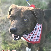 Adopt A Pet :: Abe - E. Greenwhich, RI