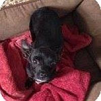 Adopt A Pet :: Bruno - Alliance, NE