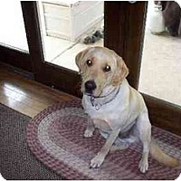 Adopt A Pet :: Chester - Commerce TWP, MI