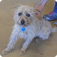 Adopt A Pet :: Molly - Wickenburg, AZ