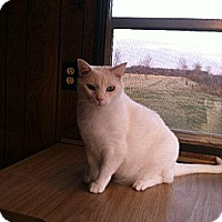 Adopt A Pet :: Jack Frost - Jefferson, OH
