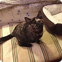 Adopt A Pet :: Cagney - St. Louis, MO
