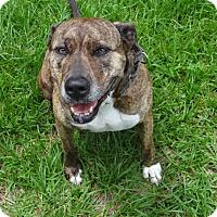 Hound (Unknown Type) Mix Dog for adoption in Jupiter, Florida - Serenity