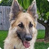 Adopt A Pet :: Maddison - Denver, CO
