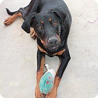 Adopt A Pet :: Casey - Nuevo, CA