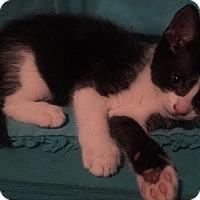 Adopt A Pet :: Snark - McDonough, GA