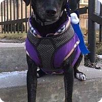 Adopt A Pet :: Trina - Milwaukee, WI