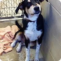 Adopt A Pet :: Hunter - Ashland, AL