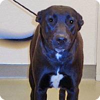 Adopt A Pet :: Zena - Wildomar, CA