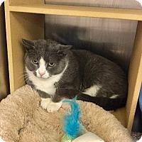 Adopt A Pet :: Shamus - Colmar, PA