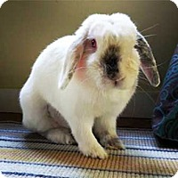 Adopt A Pet :: Ginny - Tustin, CA
