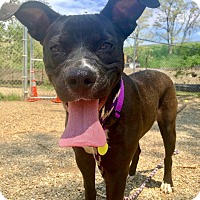 Adopt A Pet :: Joy - Cleveland, OH