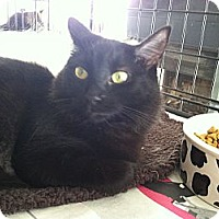 Adopt A Pet :: Neta - Santa Monica, CA