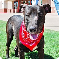 Adopt A Pet :: Smokey - White Settlement, TX