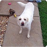 Adopt A Pet :: Lucky - Clarksville, TN
