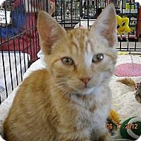 Adopt A Pet :: Julien - Riverside, RI