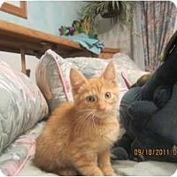 Adopt A Pet :: Dorito - Sterling Hgts, MI