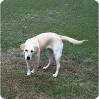 Adopt A Pet :: Jazzy - Cumming, GA