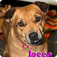 Adopt A Pet :: Jesse - Midland, TX
