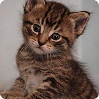Adopt A Pet :: Royal Family---William - Florence, KY