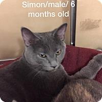 Adopt A Pet :: Simon - McDonough, GA