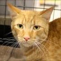 Adopt A Pet :: Rascal - Bruce Township, MI