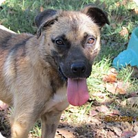 Anatolian Shepherd Mix Dog for adoption in Rutledge, Tennessee - Spirit