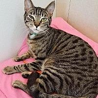 Adopt A Pet :: Mila - Westminster, CA