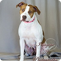 Adopt A Pet :: Bernadette - Newcastle, OK