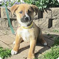 Adopt A Pet :: Talena - West Chicago, IL