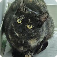 Adopt A Pet :: Helenore - Chambersburg, PA