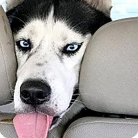 Adopt A Pet :: Hugo - Marina del Rey, CA