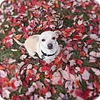 Adopt A Pet :: Jersey - Georgetown, KY