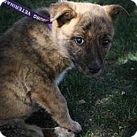 Adopt A Pet :: Peeps - Broomfield, CO