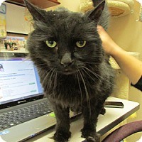 Adopt A Pet :: Meatloaf - Gilbert, AZ