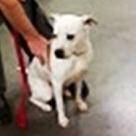 Adopt A Pet :: Electra