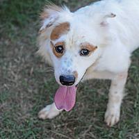 Border Collie Mix Dog for adoption in Jackson, Mississippi - Hoss