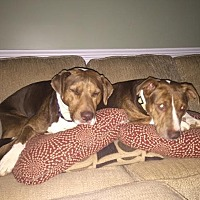 Adopt A Pet :: Mella and Gracie - Staunton, VA
