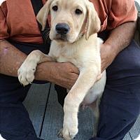 Adopt A Pet :: Wilson - Kansas city, MO