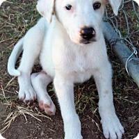 Adopt A Pet :: Casper - Waller, TX